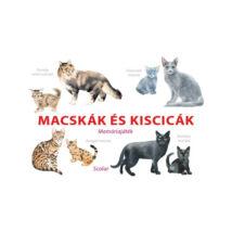 Macskák és kiscicák memóriajáték